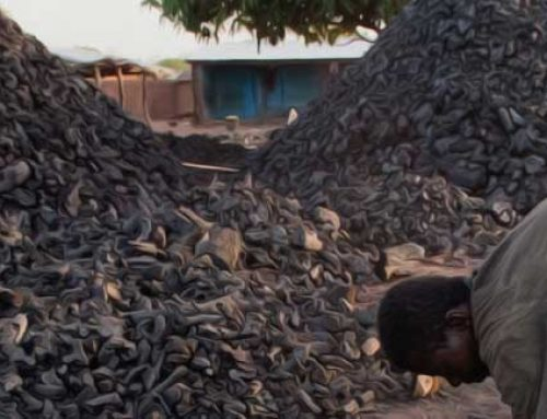 How Biomass Charcoal Could Help Save Ugandan Forests